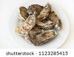 fresh oysters. raw fresh... | Shutterstock . vector #1123285415