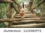 dog walking down wooden stairs...   Shutterstock . vector #1123382972