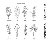 hand drawn set of culinary herbs | Shutterstock .eps vector #1123394345