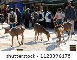 nara  japan   dec 6  visitors... | Shutterstock . vector #1123396175