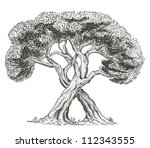trees intertwining with each... | Shutterstock .eps vector #112343555
