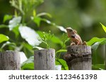 wild lizard on tree stump and... | Shutterstock . vector #1123461398