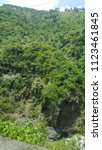 tropical forest tree's and... | Shutterstock . vector #1123461845