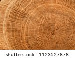 Old Wooden Oak Tree Cut Surfac...