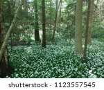 the valley of the garlic forest ...   Shutterstock . vector #1123557545