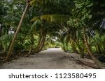 jungle and the path at sunny... | Shutterstock . vector #1123580495