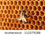 Yellow Beautiful Honeycomb Wit...