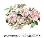 watercolor hand painted  bouqu... | Shutterstock . vector #1123816745