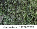 the texture of pine with moss | Shutterstock . vector #1123887578