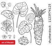 vector set of outline wasabi or ... | Shutterstock .eps vector #1123974125