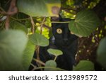 a graceful black cat with... | Shutterstock . vector #1123989572