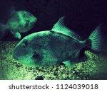 sea fish in the aquarium  green ... | Shutterstock . vector #1124039018