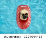 cute pug dog floating in a... | Shutterstock . vector #1124044418
