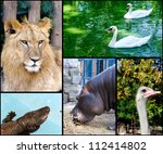 wild animals in the zoo collage | Shutterstock . vector #112414802