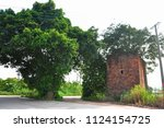 banyan tree grows on top of a... | Shutterstock . vector #1124154725
