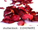 Stock photo close up of dry petals of red roses on white background 1124196092