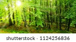 beech trees forest at spring... | Shutterstock . vector #1124256836