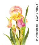beautiful watercolor iris on a... | Shutterstock . vector #1124378825
