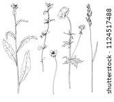 vector set of ink drawing wild... | Shutterstock .eps vector #1124517488