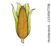 corn on the cob hand drawn... | Shutterstock .eps vector #1124567708