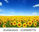 sunflowers field on sky... | Shutterstock . vector #1124640776