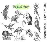 exotic tropical birds vector... | Shutterstock .eps vector #1124674388