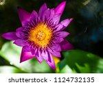 colorful lotus flower. | Shutterstock . vector #1124732135