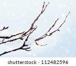 Frosty Tree Branch With Snow I...