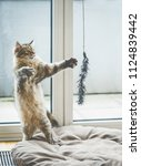 Stock photo cat game funny fluffy kitten stands on its hind legs and plays with a hanging cat toy at window 1124839442