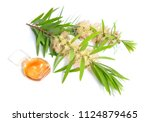 melaleuca  tea tree  essential... | Shutterstock . vector #1124879465