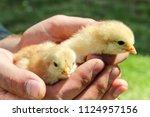worker man holding newborn... | Shutterstock . vector #1124957156