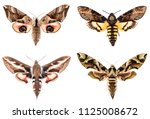 set of four sphingidae hawk... | Shutterstock . vector #1125008672