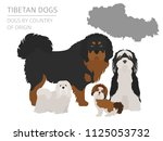 dogs by country of origin.... | Shutterstock .eps vector #1125053732