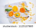 marigold or calendula flowers... | Shutterstock . vector #1125137885