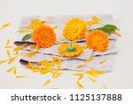 marigold or calendula flowers... | Shutterstock . vector #1125137888