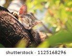 Stock photo cat sleeping on the tree 1125168296