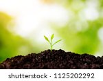 the seedling are growing in the ... | Shutterstock . vector #1125202292