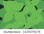 stinging nettle background... | Shutterstock .eps vector #1125274175