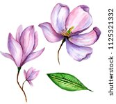 wildflower magnolia flower in a ... | Shutterstock . vector #1125321332
