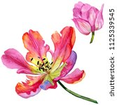 colorful summer tulip. floral... | Shutterstock . vector #1125339545