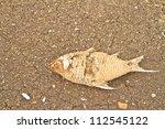 Run Dry In Dam And Dead Fish ...