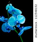 Blue Orchid In Drops Of Dew On...
