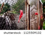 old rusty steel wire fence with ... | Shutterstock . vector #1125509132