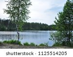 forest lake landscape with...   Shutterstock . vector #1125514205