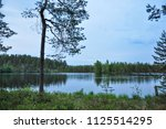 forest lake landscape with pine ...   Shutterstock . vector #1125514295