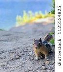 Ground Squirrel On Utah S Lake...