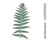 illustration of fern frond leaf | Shutterstock .eps vector #1125593432
