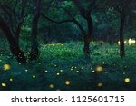bokeh light of firefly flying... | Shutterstock . vector #1125601715