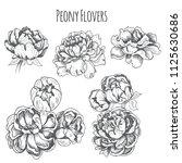 peony flowers set. vector...   Shutterstock .eps vector #1125630686
