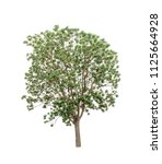 isolated tree on white... | Shutterstock . vector #1125664928